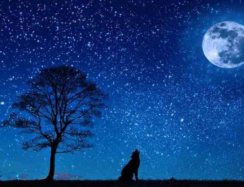 Lenormandgeflüster – Die Sterne