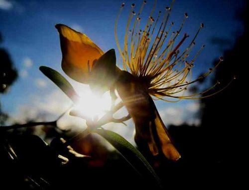 Litha – Die Sommersonnenwende