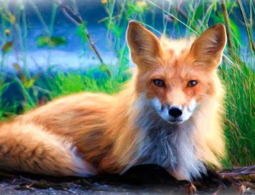Lenormandgeflüster – Der Fuchs