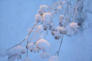 rauhnacht-schnee