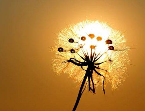 Lenormandgeflüster – Die Sonne